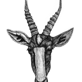 South African Antelope